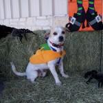 Halloween Pet Contest 1