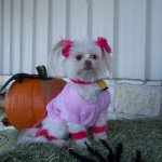 Halloween Pet Contest 2