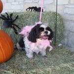 Halloween Pet Contest 4