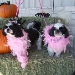 Halloween Pet Contest 6