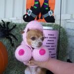 Halloween Pet Contest Winner 1