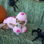 Halloween Pet Contest Winner 3