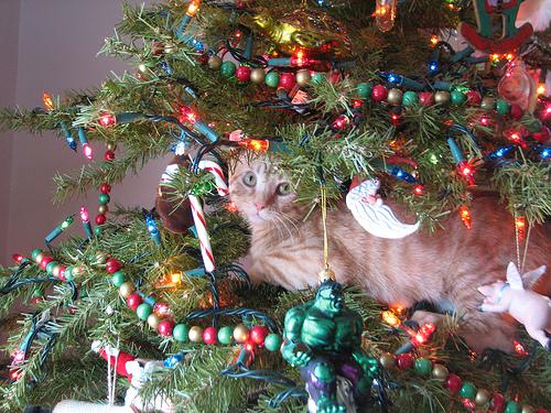 cat-safe christmas tree