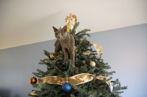 Cat Safe Christmas Tree :: New Braunfels Feed & Supply