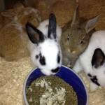bunny 1