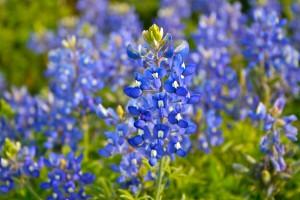Planting Wildflowers