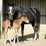 horses 1 150x150 Winter Tips for Horses