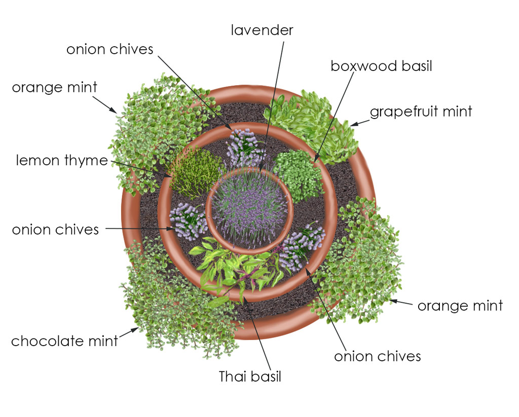 Garden Ideas: Herb Container Gardens :: New Braunfels Feed & Supply