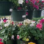 nbflowers