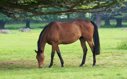 green grass for horses