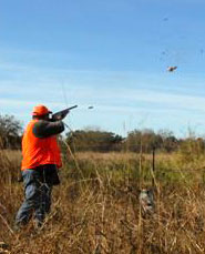 Texas Quail Hunting Dates