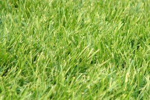 Best Time to Plant Fall Grass