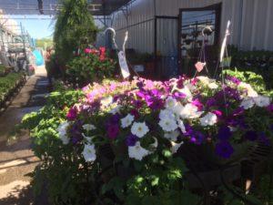 garden center spring 17