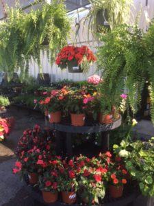 garden center spring 172