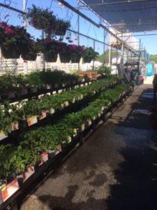 garden center spring 173