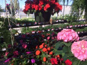 garden center spring 177