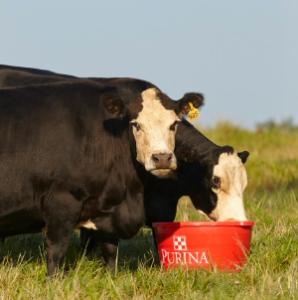 Cattle Mineral Program