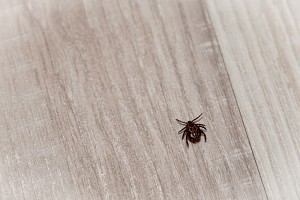 get rid of chiggers organic and synthetic pest control new braunfels feed supply. Black Bedroom Furniture Sets. Home Design Ideas
