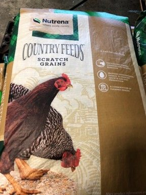Poultry Drinkers Available at New Braunfels Feed